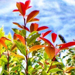 Una pianta fiorita